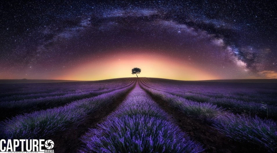 Capture Mania Photography Magazine Jesusmgarcia_lavander_field_and_milky way_1x