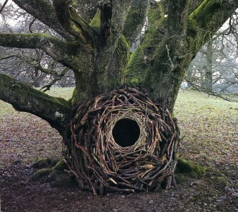 andy_goldsworthy_tree_portal