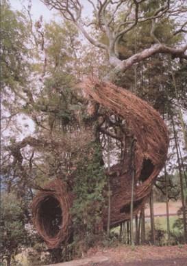 pat_dougherty_treespiral