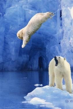 polar__bear_dive