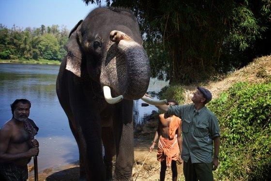Elephant story 15