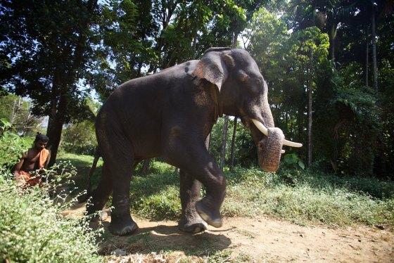 Elephant story 20