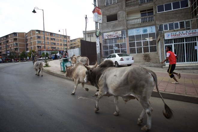 Welcome to Ethiopia