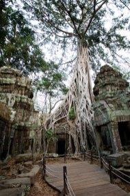 Angkor 15