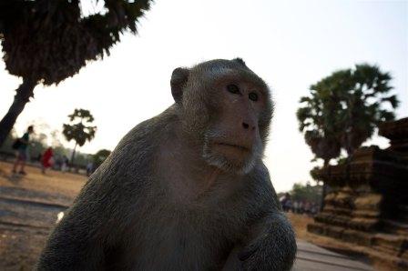 Angkor 5