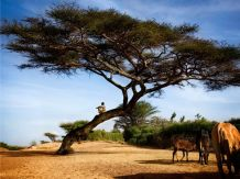 06 ethiopia-boy-tree_6004_600x450