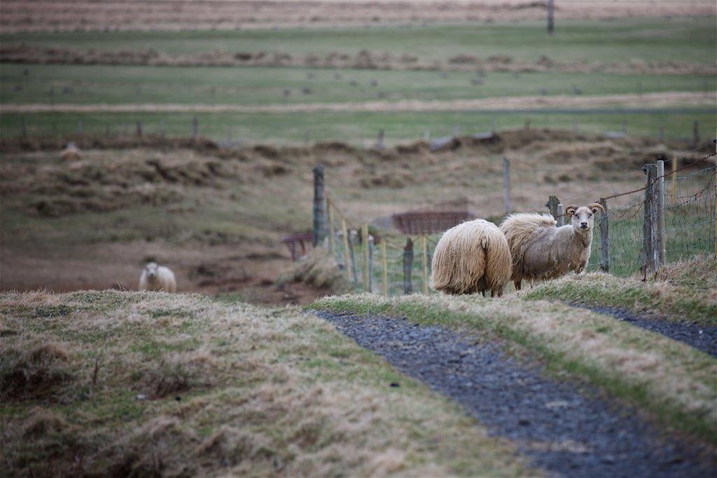 Traversing Icelands Reynisfjara, Skaftafell and Hvannadalshnúkur 5