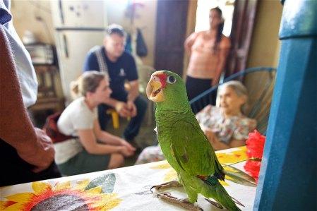 Ponchita, the parrot with an attitude :-)