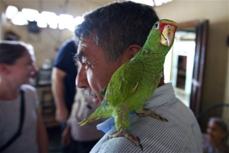 Ponchita on Pastor Aguilar's shoulder