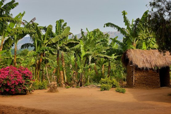 The Uganda countryside 2