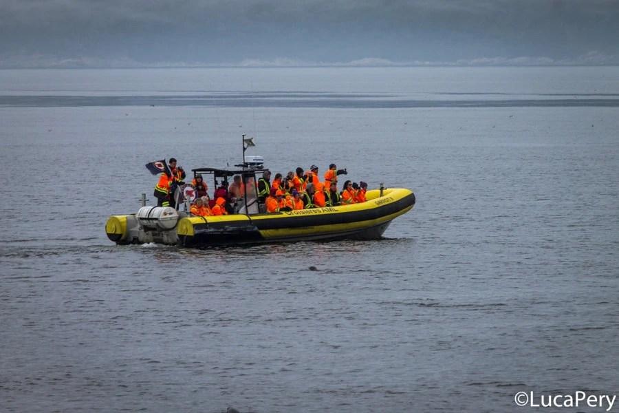 Come-vedere-balene-tadoussac