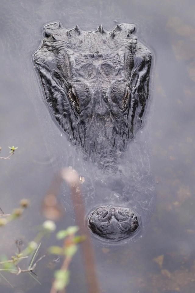 Cosa vedere alle Everglades