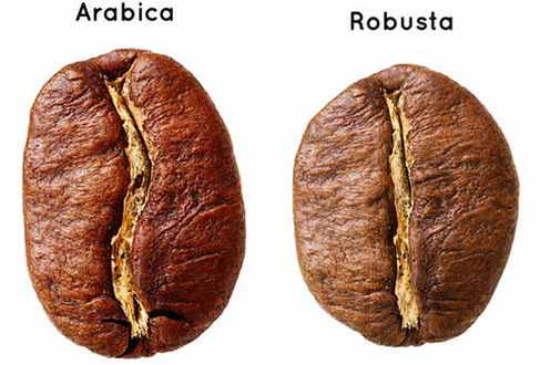 cafe-arabica-vs-robusta