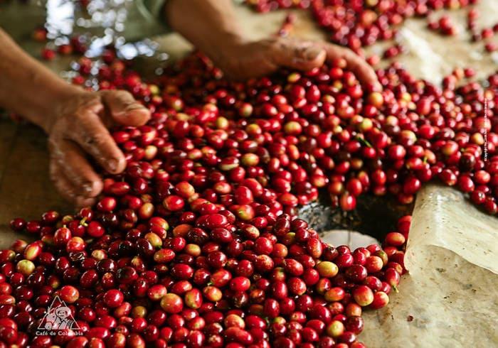 El café alrededor del mundo: América del Sur  - Colombia