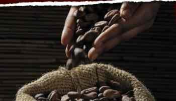 El mejor café en grano: cómo comprar, elegir y preparar el mejor café para tu cafetera express