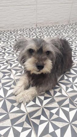 perros-en-lima-1571492160