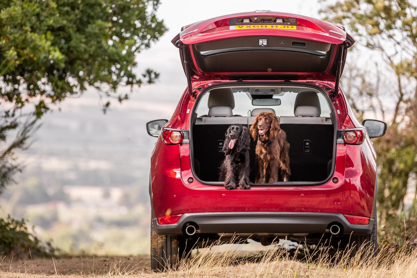 Best Cars For Dog Owners 2019 Uk Our Pick Of New Cars For Carrying Pets Car Magazine