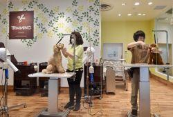 5 Cara Bisnis Salon Hewan dan Potensi Pendapatannnya