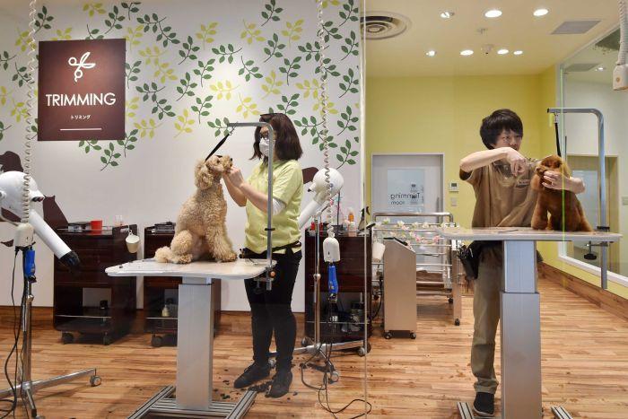 salon hewan trimming