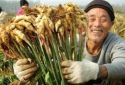 4 Ide Bisnis Kreatif dalam Bidang Pertanian dengan Prospek Baik
