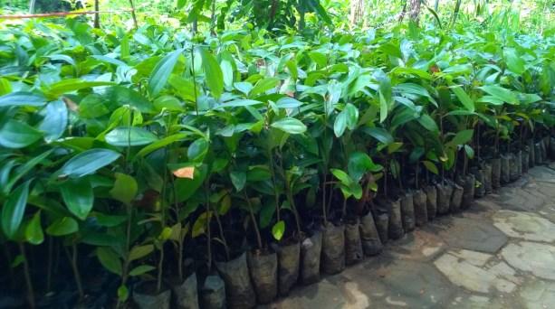 Menjual Bibit tanaman