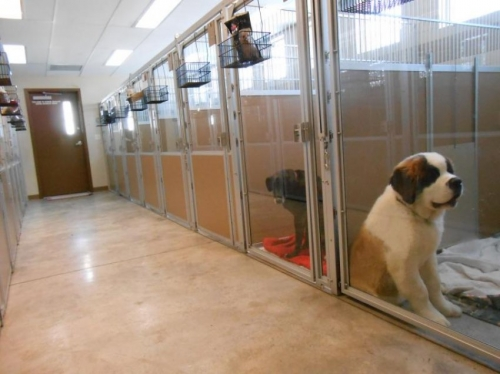 Ide bisnis bagi pecinta hewan