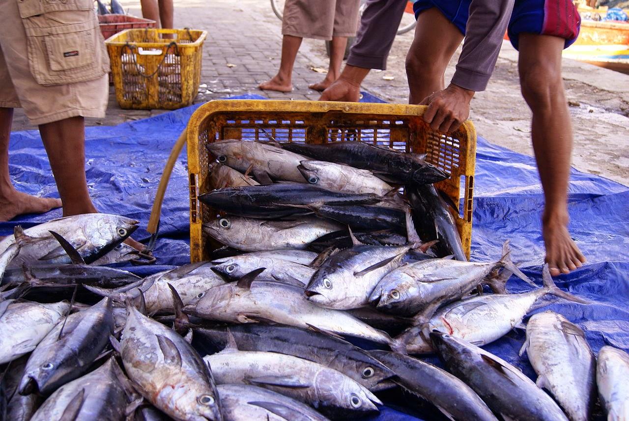 Supplier Ikan laut