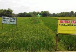 6 Cara Membeli Tanah dengan Harga Murah Untuk Bisnis yang Mudah