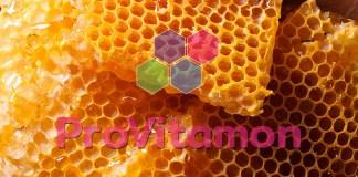 khasiat madu hutan