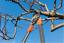 """Image result for pruning time"""""""