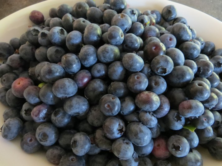 Chemical free blueberries