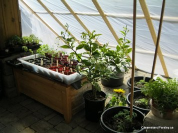 Temporary greenhouse for vegetables