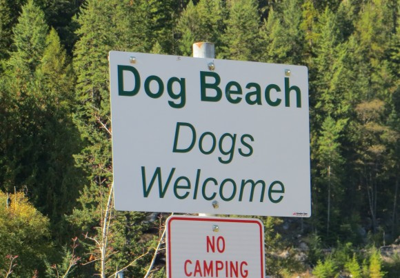 Dogs welcome - Slocan Lake beach