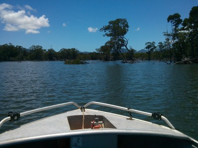 Many species of Mangroves grow all along the coastal waters of Queensland
