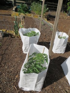 Protecting plants Australian way