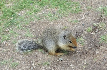 Gophers another large concern in country areas