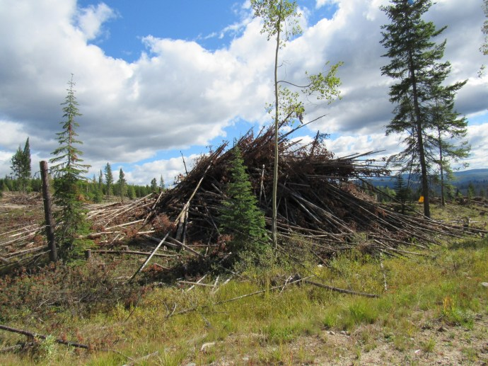 After logging - brush piles ready to be burnt