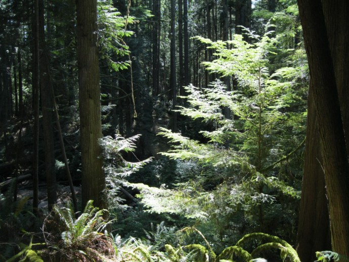 Luxuriant temperate rain forest