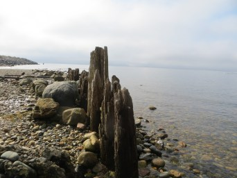 Peaceful ocean waters at low tide