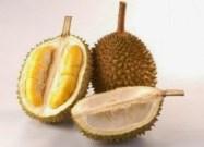 cara memilih buah durian yang matang dan enak