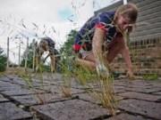 cara mematikan dan menghilangkan rumput liar di pekarangan