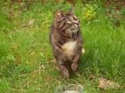 cara mengatasi dan mengusir kucing liar dari pekarangan rumah