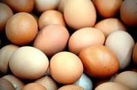cara praktis memilih telur segar