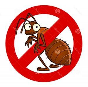 cara menghilangkan semut di rumah secara alami