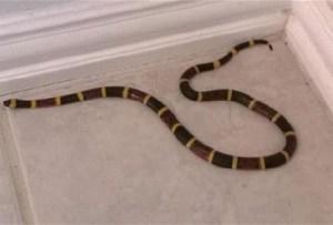 cara mencegah ular masuk rumah