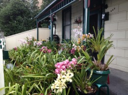 Annual display of orchids