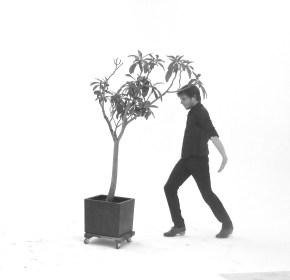 Biomimetic connection honevo bionic dance