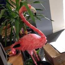 lovehoney tour visit the pink flamingo from coco de mer