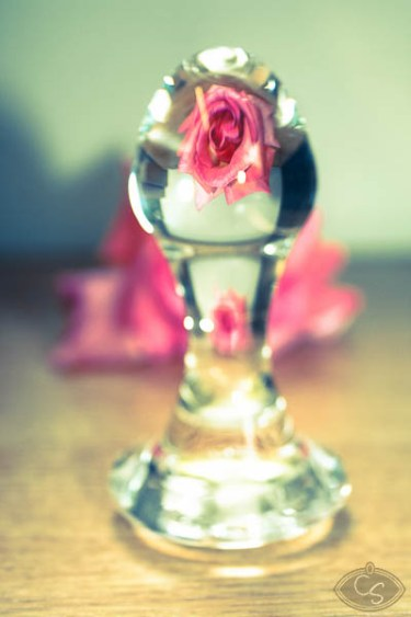 rose-and-glass (8)