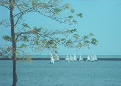 116 - a fleet of sails